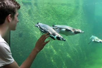 Im Aquapark leben Otter, Pinguine, Seelöwen und Eisbären zusammen.