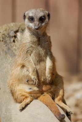 Über 850 Tiere können Gäste im Tierpark Gotha besichtigen.