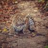 Wenn du Glück hast, gibt es im Tierpark Gotha Nachwuchs zu bestaunen.