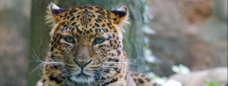 Der Tierpark in Gotha ist zu jeder Jahreszeit ein beliebtes Ausflugsziel. Auch wilde Tiere gibt es dort zu sehen.