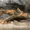 Mittagspause in der Löwenschlucht