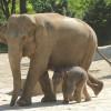 Jährlich werden im Tierpark Hagenbeck bis zu 200 Jungtiere geboren.