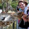 Die Giraffen dürfen vom Hochstand gefüttert werden.
