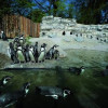 Pinguine in Hellabrunn