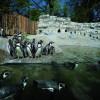 Pinguine in Hellabrunn