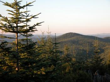 Blick auf den Tillamook State Forest