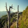 Freier Blick auf den Tillamook Wald