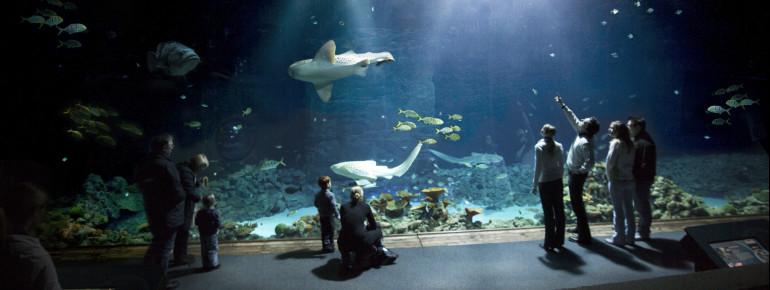 Das Große Hai-Atoll ist der Höhepunkt des Rundgangs.
