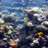 Im Korallenriff gibt es jeweils mehr als 60 Korallen- und Fischarten zu entdecken.