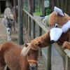 Ponys und andere Tiere kannst du in der Walderlebniswelt streicheln.