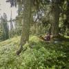 Nur du und über 1000 Fichten - Entspannung pur beim Waldwellness.