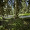 Mitten im Wald warten die Hängematten auf ihre Besucher.