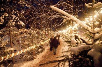 Verschneite Christbäume vermitteln eine winterliche Stimmung