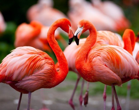 Wunderschöne Flamingos im Weltvogelpark