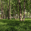 Der Waldfriedhof in einem ruhigen Teil des Wiener Zentralfriedhofs ermöglicht naturnahe Bestattungen.