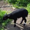 Im Streichelzoo leben unter anderem Ziegen und Schafe.
