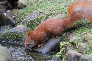Die Eichhörnchen springen im begehbaren Kobel den Besuchern schnell mal über Kopf und Schulter und halten nach leckeren Häppchen Ausschau.