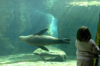 Robben gehören zu den Meeressäugern und kommen deshalb im Wasser sehr viel besser voran als an Land.