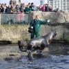 Du kannst im Zoo beim Training mit den Robben zusehen.