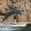 Äußerst beliebt bei den Besuchern ist im Zoo Duisburg die Delfinshow.