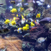 Blick ins Panoramabecken des Aquariums.