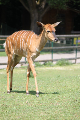 Das neue Gehege der Nyala Antilopen wurde 2017 fertiggestellt.
