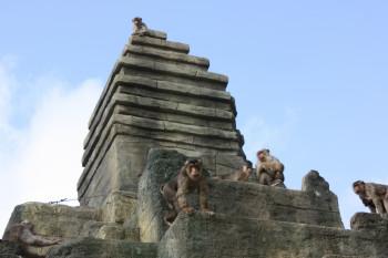 Der 16 Meter hohe Affentempel ist ein Blickfang.