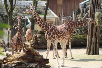 Im Zoo wohnen rund 290 verschiedene Tierarten.