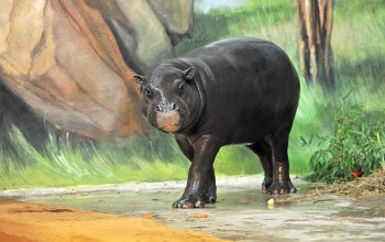 Im Zwergflusspferdhaus können Zwergflusspferde, Rüsselspringer und Schildkröten besichtigt werden.