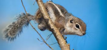 Im Darwineum empfängt dich dieses Harris-Antilopenziesel.