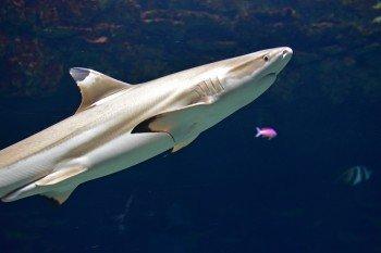 Auch Haie leben im Aquazoo.