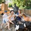 Der Streichelzoo ist ein echtes Erlebnis für kleinere Zoobesucher.