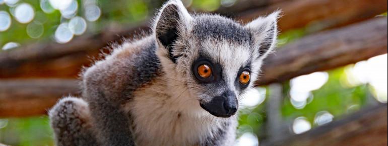 Im Stadtgarten Karlsruhe leben alle Tiere in Themenwelten, die ihrem natürlichen Lebensraum nachempfunden sind.