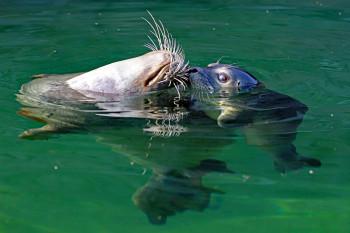 """Robben und Pinguine können im """"Lebensraum Wasser"""" bestaunt werden."""