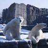 In der Erlebniswelt Alaska leben sogar Eisbären.