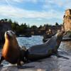 Die Seelöwen findest du in der Polarregion der Erlebniswelt Alaska.
