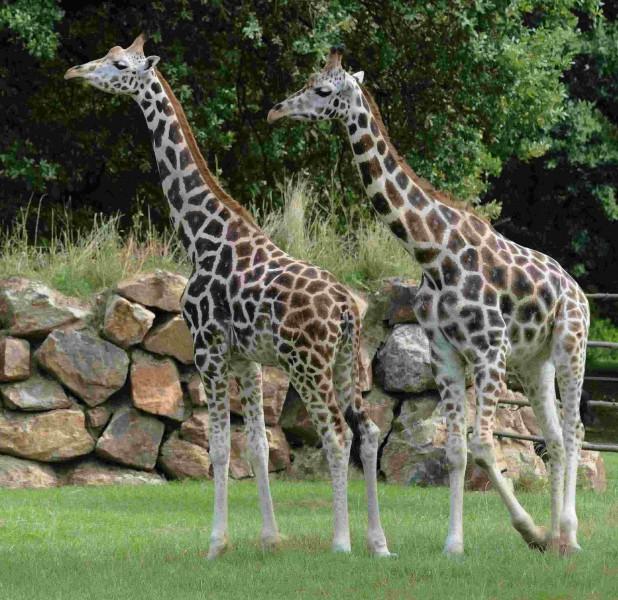 Pilsen – Zoologischer und Botanischer Garten ...
