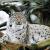 A rare animal: The lynx