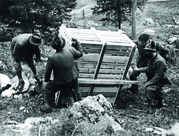 Over 65 years ago, ibexes were resettled in Pitztal.