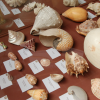 Shells in all shapes
