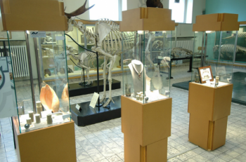 At the museum, you find everything there is to know about both land-living animals and maritime creatures