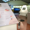 Scientific insights are presented to the public in the most informative and exciting way at the museum