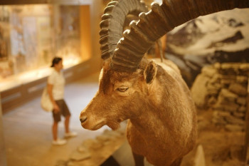 Not only people from the Stone Age, but also earlier forms of the animal world are shown in the Archeoparc