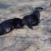 Three of the local otters.
