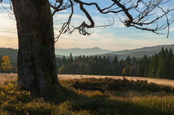 Enjoy the idyllic landscape at a hike in the Bavarian Forest.