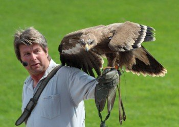 Experience falcons from up close.