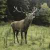 The nature reserve is home to deer and many other species.