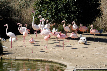 Flamingos at Bird Park in Kennedy Grove.