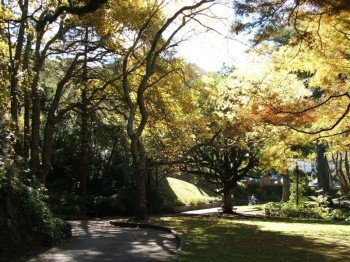 Light flooded Botanic Garden in autumn