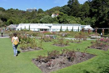 One segment of Wellington's Botanic Garden